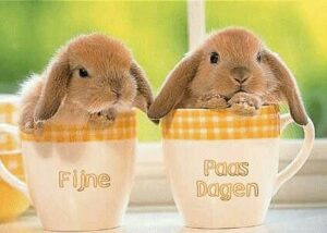 Bestel tijdig uw Paasontbijt !!!